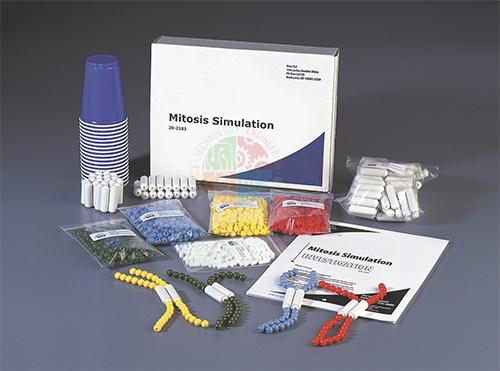 Mitosis Simulation Lab Investigation