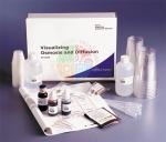 Visualising Osmosis & Diffusion Investigation